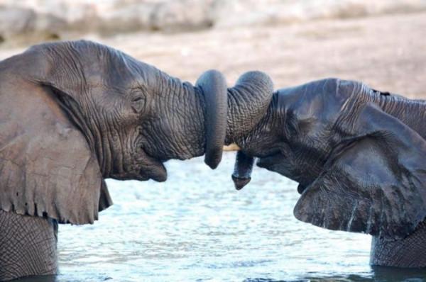 прикол слоны