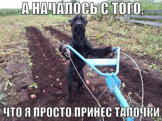 _пес помощник