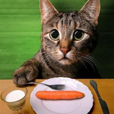 _прикол кот морковь