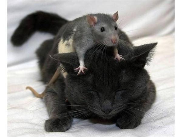 _прикол мышь и кот