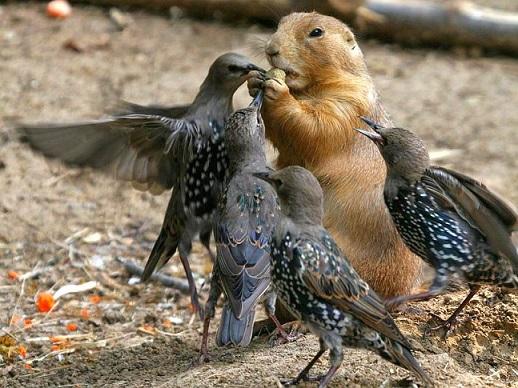 _прикол наглые птицы