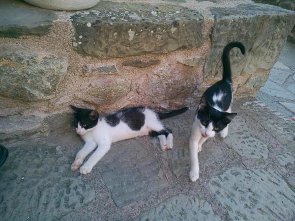 стефана_кошки_1