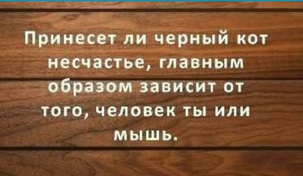 _правшутят_черный кот