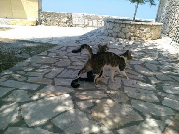 кошки_панток_1