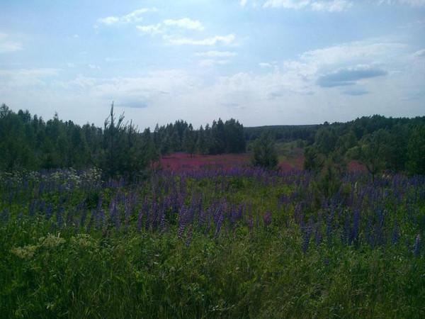 июнь2015 6 у Надеждино