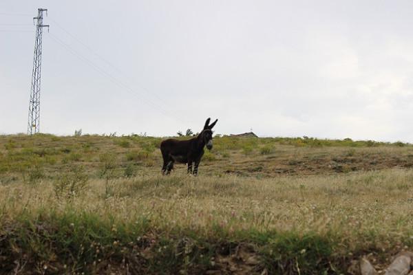 ослик по дороге в монастырь св. Георгия, Болгария