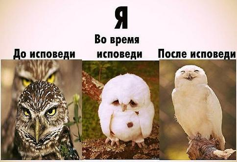 прикол сова исповедь