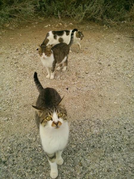 мыс_маяк_кошки