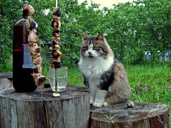 прикол кошка и шашлык