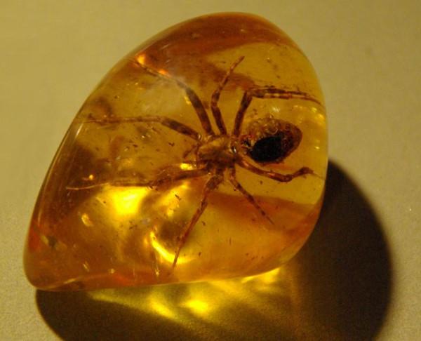 янтарь -паук