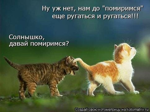 прикол котята