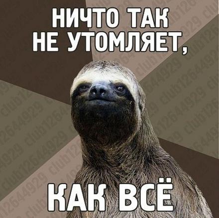 прикол ленивец
