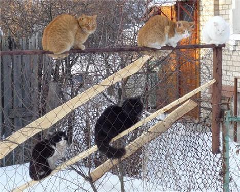 прикол Март - коты прилетели