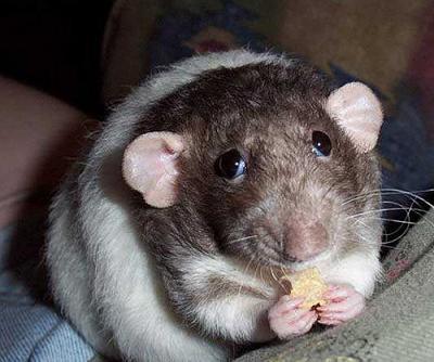 прикол мышь