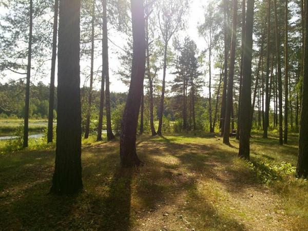 Колпь заказник дорога лес полянка