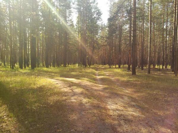Колпь заказник дорога лес развилка