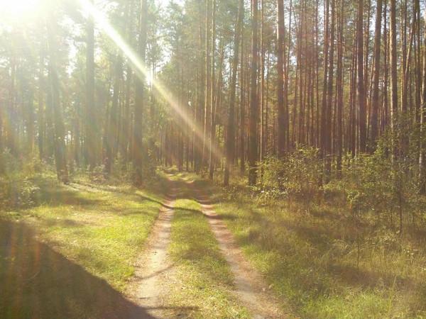 Колпь заказник дорога лес