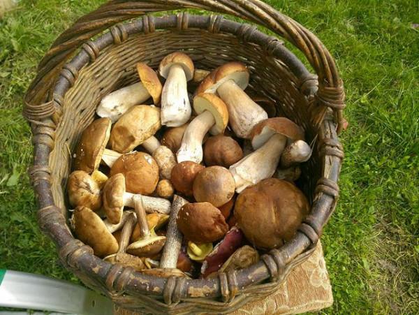 корзина с грибами крупно