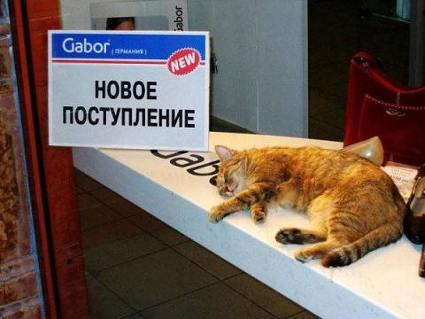ю кот поступление