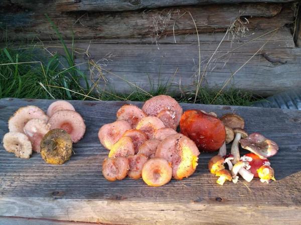 грибы пятница