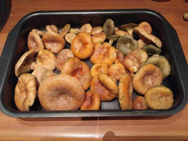 грибы к заморозке