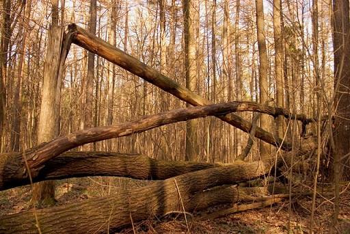 валежник в лесу
