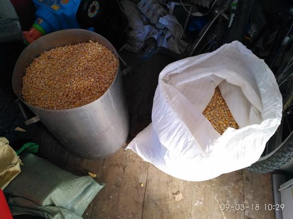 кукуруза запасы