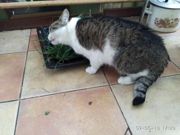 кошка есть траву