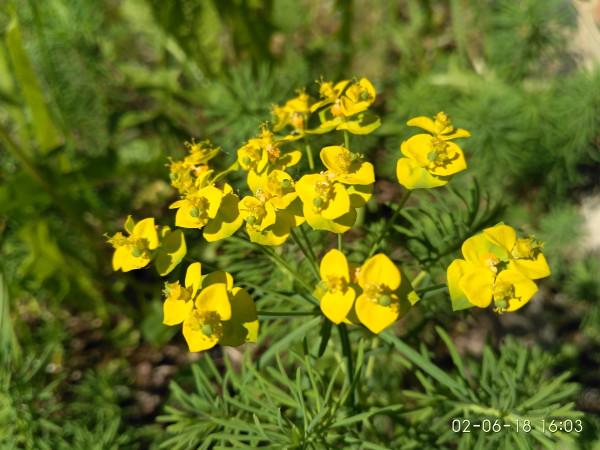 _желтенькие