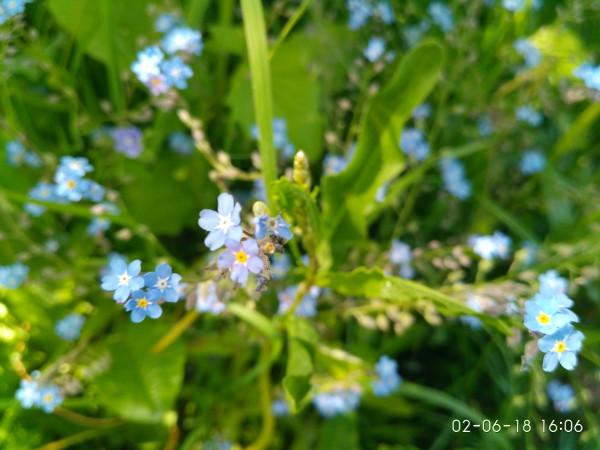 _синенькие