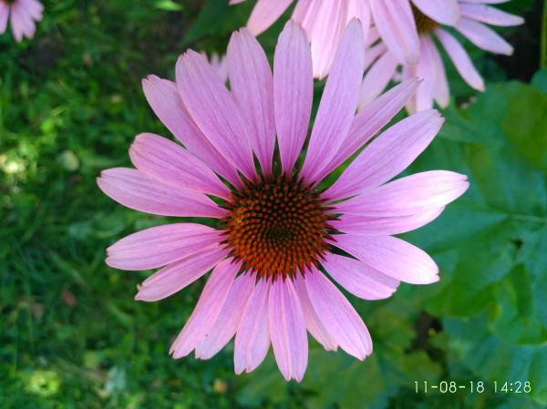 _дача цветы 4