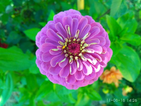 _дача цветы 2