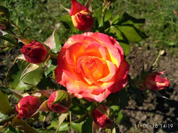 _дача цветы 3