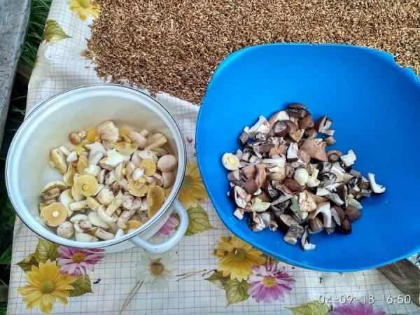 _грибы урожай