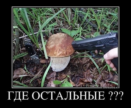 юмор гриб