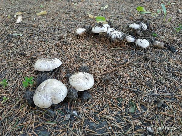 грибы мифи