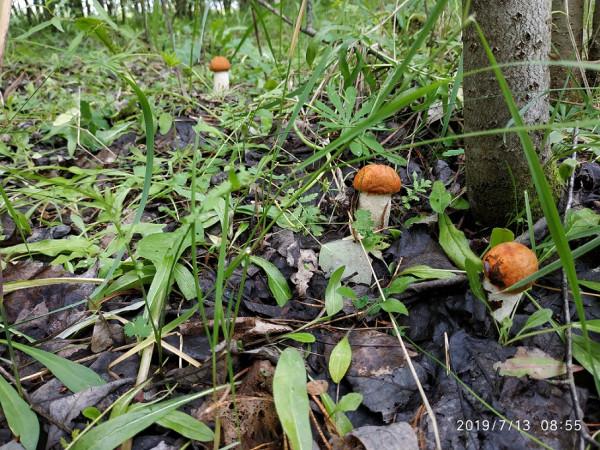 _грибы 2