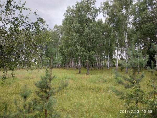 _лес Горицы