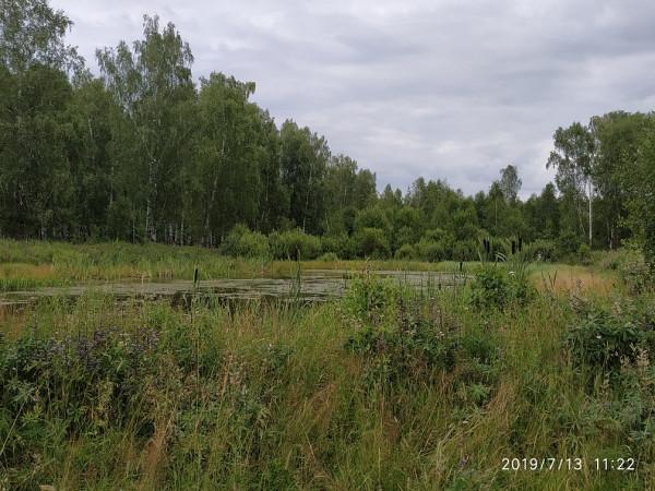 _лес Горицы пруд