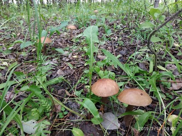_грибы подбер