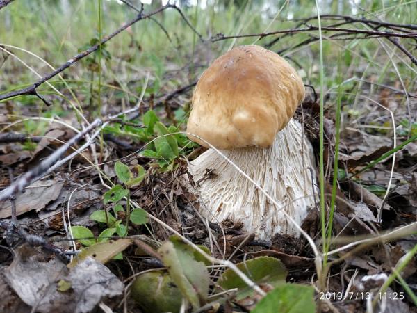_грибы 7