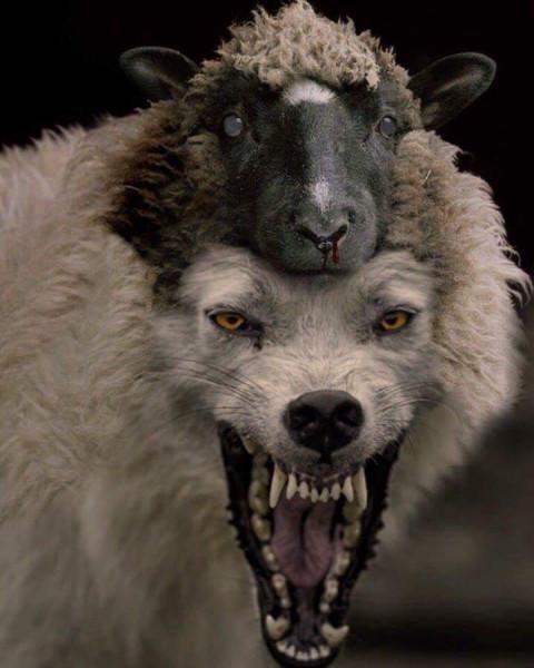 под маской овцы