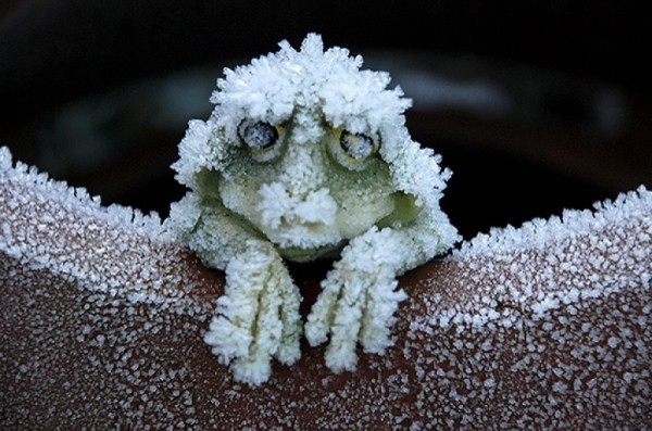 _холодное лето 0