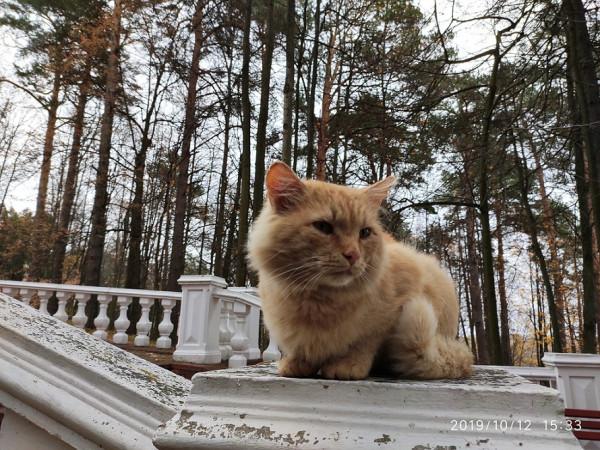 _снегири кот