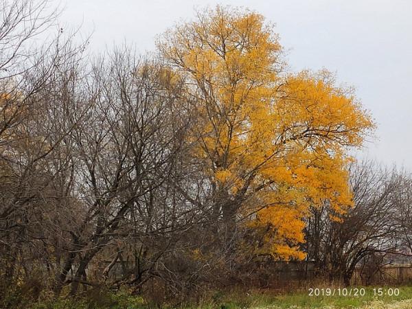 _тсха дерево