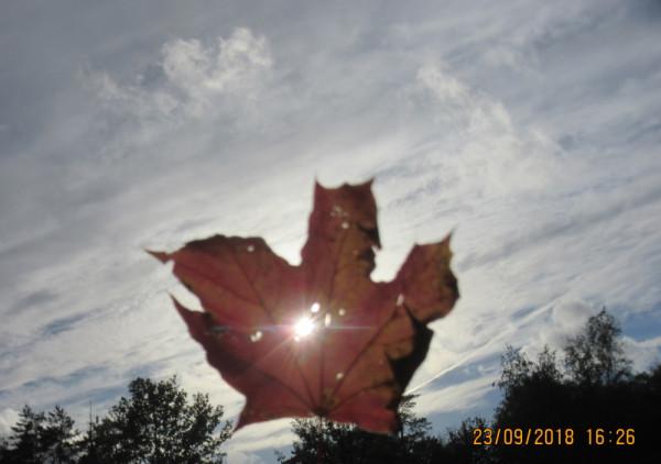Растительный мир - в День осеннего равноденствия.