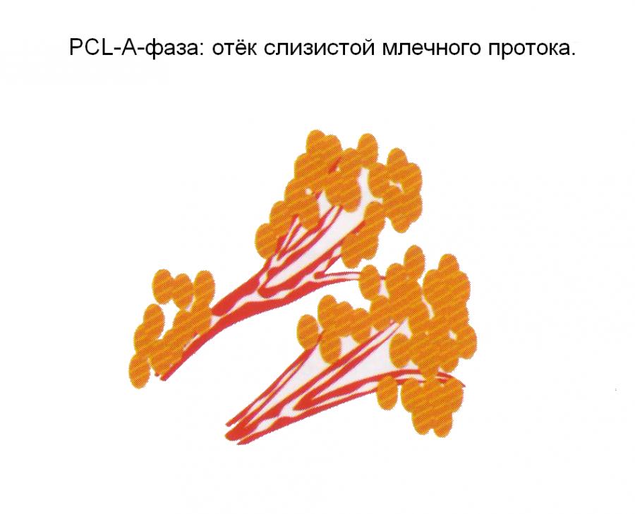 Грудь 4 pcl1
