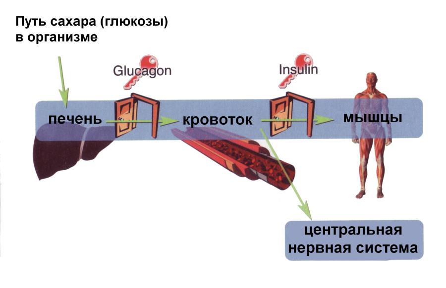 Листья инжира от сахарного диабета - Инжир или фига.