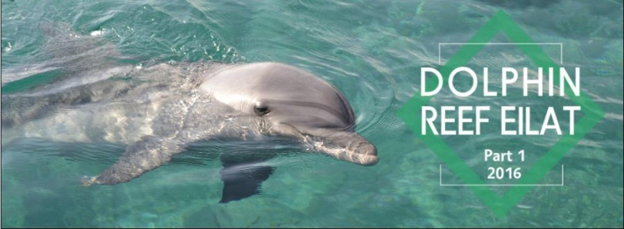 dolphin reef1