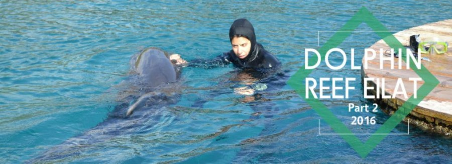 dolphin reef2